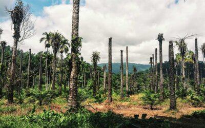 Indigene Völker durch Corona existenziell bedroht