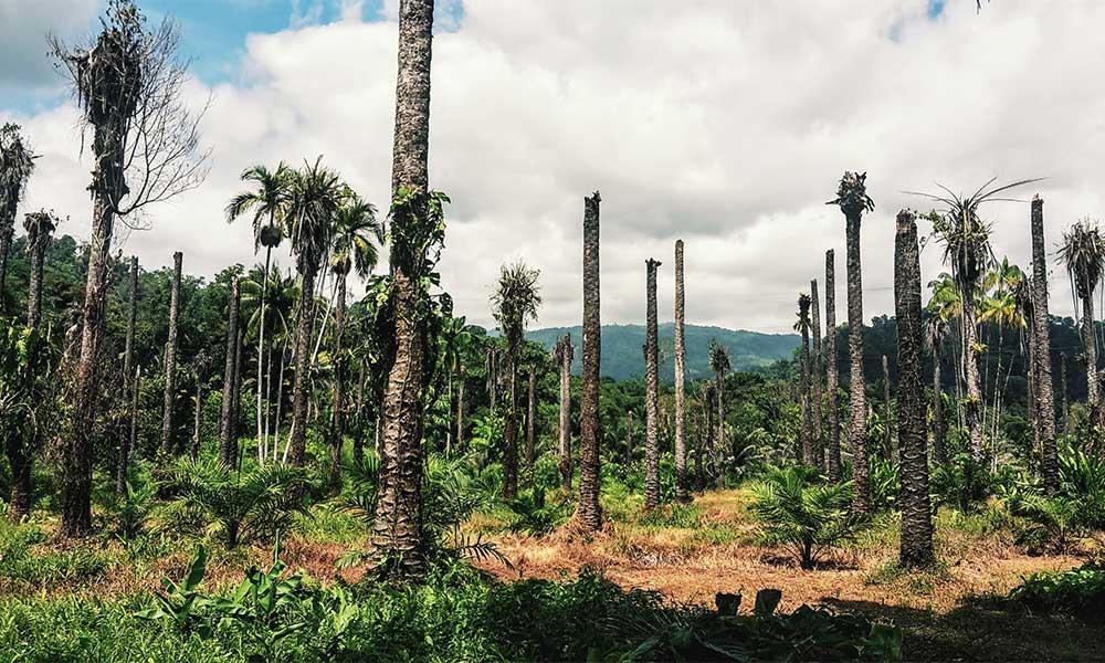CH: Coop reduziert nach Petition Verbrauch von Palmöl