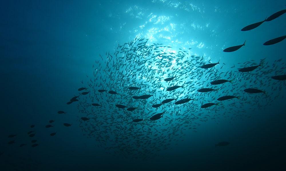 """""""End of Fish Day"""" gegen Überfischung der Ozeane"""