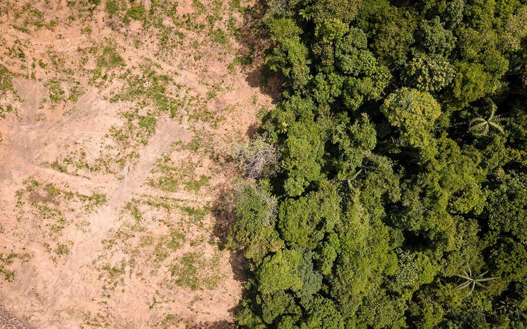 Die Rolle der Menschenrechte in der ökologischen Krise