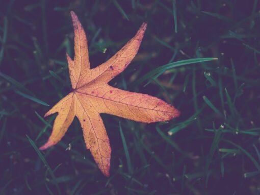 Projekt: Sterne im Herzen – spirituelle Begleitung bei perinatalen Trauerfällen