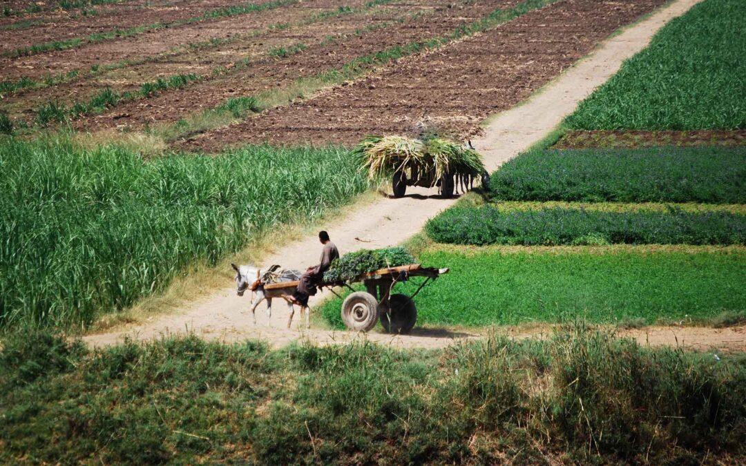 Lokalität und Kreislaufwirtschaft als Mittel gegen Hunger